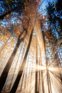 sun beams in an autumn morning forest
