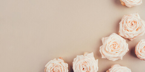 Spring background. Rose flowers on a beige background. Flat lay. Copy space for your text.