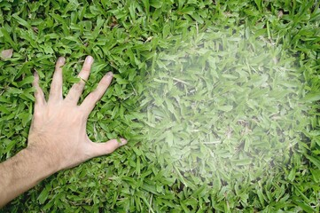 Hand touching green grass field