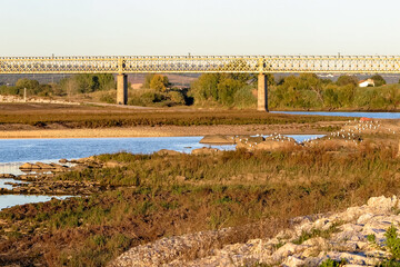 Railway bridge over the Tejo River, in drought season, with herons on the rocks, city of Abrantes,...
