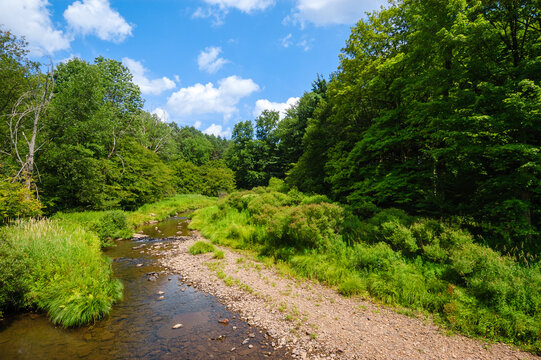 Flowing Water in Lush Woodland, Allegany State Park