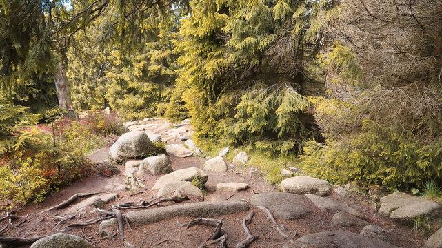 Wandern im Harz Brocken - Wald und Teufelsstieg