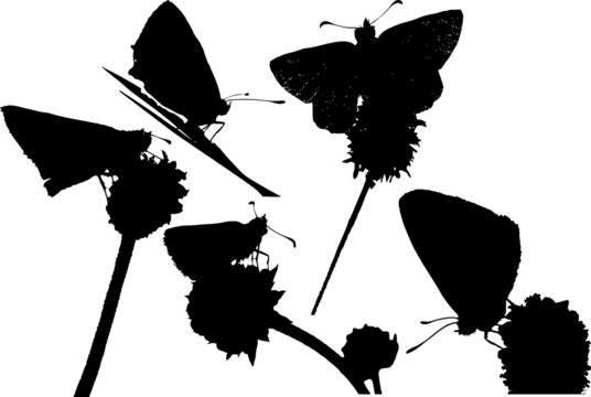 5 silhouette of a butterfly