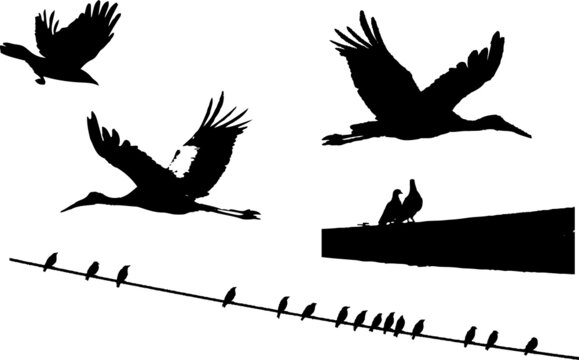 5 silhouette of a birds
