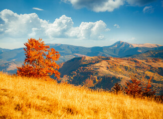 Wall Mural - Incredible autumn landscape in sunny day. Location place of Carpathian mountains, Ukraine.