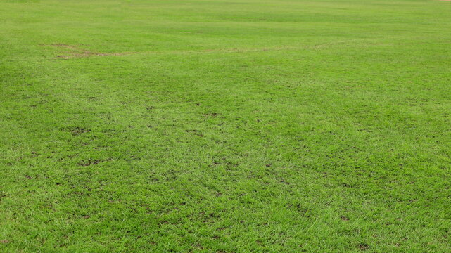 Imperfect green lawn. A heavily used soccer field leaves the grass dead or chipped, some full-frame areas with copy space. selective focus