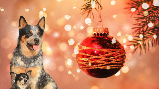 Zwei Hunde vor roter Weihnachtskugel