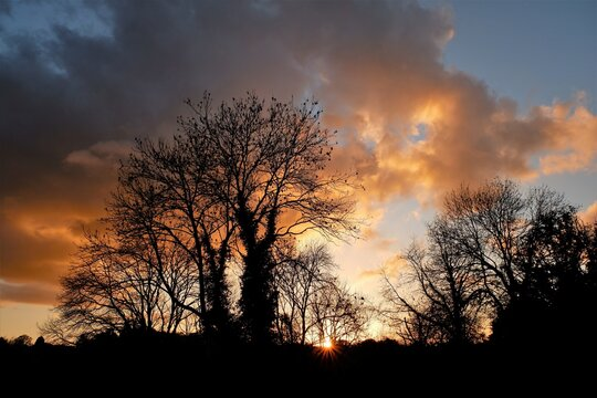 Dramatic sunset with cloud reflection and silhouetted trees