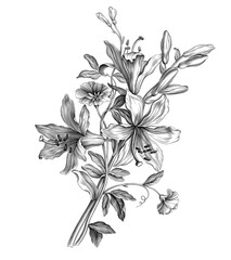 Lilies flowers bouquet vintage botanical illustration vector Victorian Baroque engraved garden wild floral ornament tattoo scroll filigree