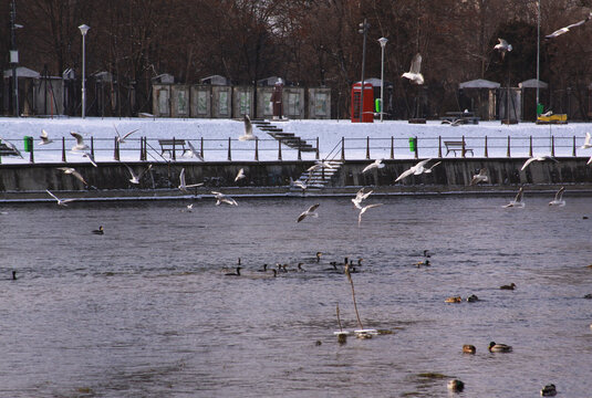 Winter birds flying in Cluj-Napoca, in cold winter