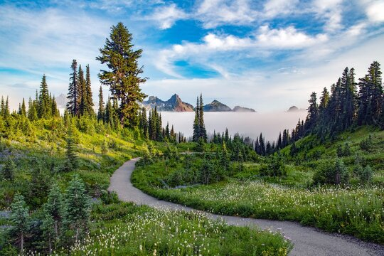 A trail at Mount Rainier national park leading through a forest with a layer of low fog