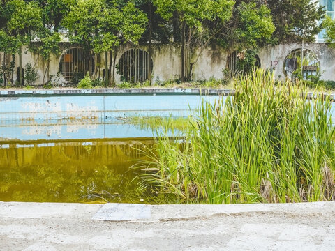 Old abandoned sanatorium pool overgrown with reeds with green muddy water