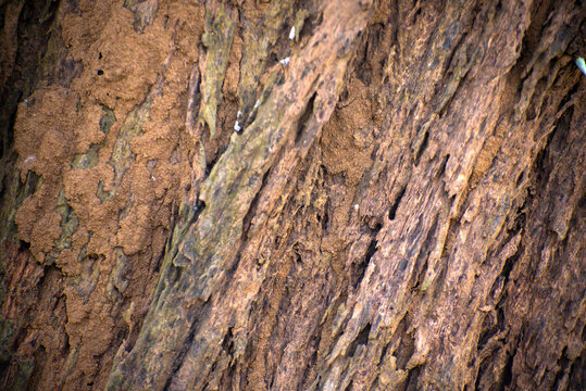 Close up of rough tree trunk texture background.