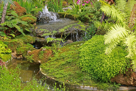 Mossy rock features and exotic plants in a tropical garden, southeast Asia