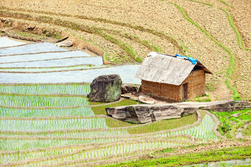 The dfarm house on terraced rice fields in Lao Cai province, Vietnam
