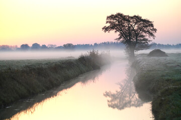 Dawn with lonely Tree reflected in a Brook