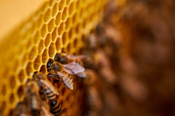 a lot of bees piled it into cells, in comb contains nectar, honey and pollen. close-up