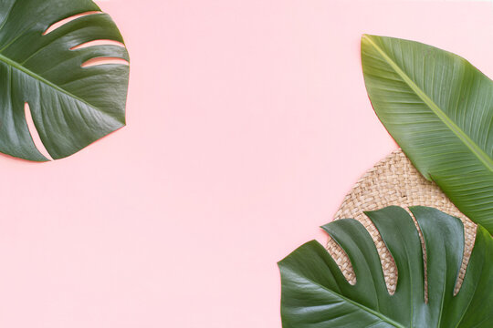 Tropical background with palm monstera leaves on pink.