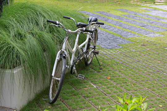 Vintage white tandem bicycle in garden setting