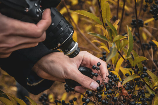 Photographer takes photos of berries .