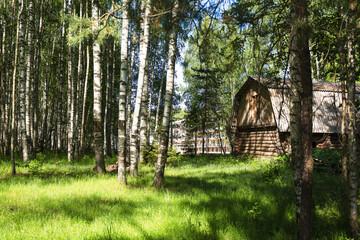 impressive wooden hut in a beautiful birch grove in summer