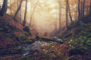 Amazing autumn landscape with misty dark forest and mountain creek, nature background suitable for wallpaper or cover