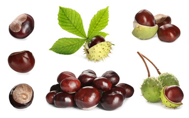Set of brown horse chestnuts with green leaf isolated on white
