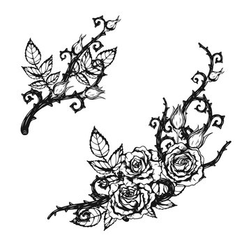 Rose ornament tattoo by hand drawing.Beautiful flower on white background.Anne Harkness rose vector art highly detailed in line art style.Flower tattoo for paint or pattern.