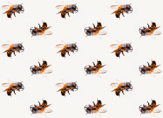 bees pattern macro popart white background