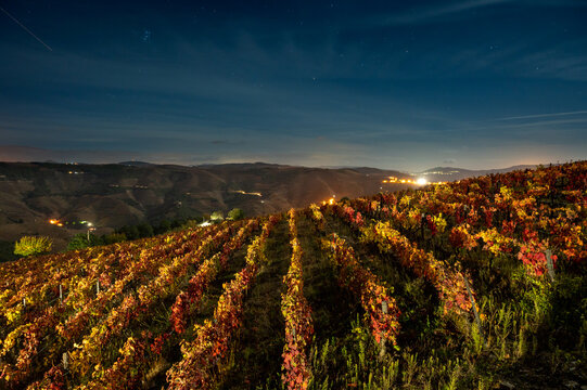 Colorful autumn landscape of oldest wine region in world Douro valley in Portugal, different varietes of grape vines growing on terraced vineyards, production of red, white and port wine.