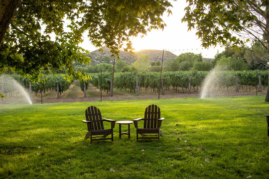 Lawn chairs in grass sprinklers and vineyard in background