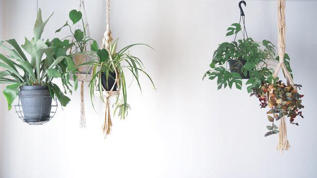 吊るし植物のハンギンググリーンがある室内