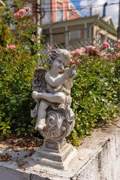 Tver, Tver region. Bright summer day in the city garden. Roses