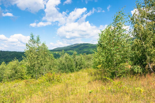 young forest on the meadow in mountains. summer nature scenery with range of trees beneath a blue sky with fluffy clouds in summer