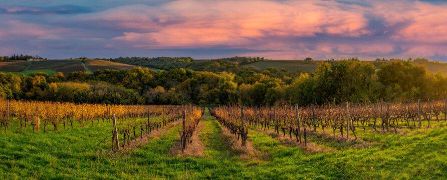 Vineyard Sunrise in Bordeaux Vineyard,France, High quality photo