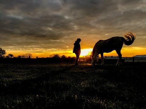 cheval equitation soleil soir saison environnement loisir