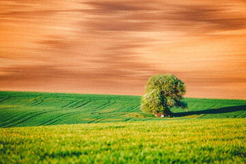 Wall Mural - Perfect sunlight on the wavy fields of agricultural area. Location place of South Moravia region, Czech Republic, Europe.