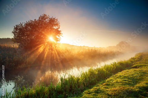 Wall mural Fantastic foggy river with fresh green grass in the sunlight.