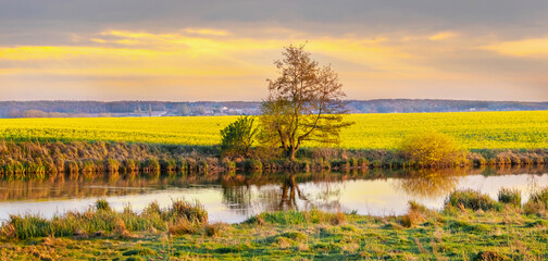 Spring landscape with river and yellow rapeseed field during sunset