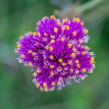 Fleur violette et jaune formant un effet d'aspiration