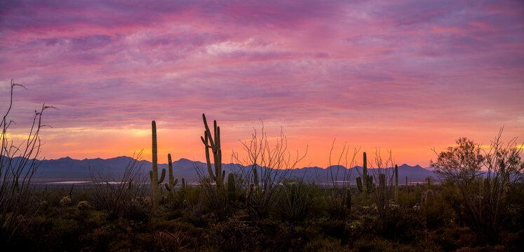 A dramatic sunset close to Scottsdale Arizona hiking trail with Saguaro Cactus.