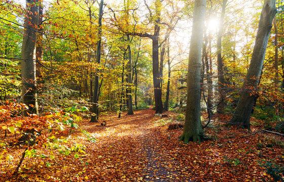 Farbenfroher Herbstwald mit Waldweg im Sonnenlicht