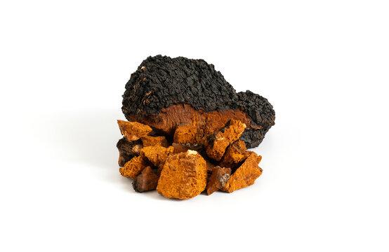 Chaga mushroom isolated on a white background. Chopped pieces of chaga mushroom.