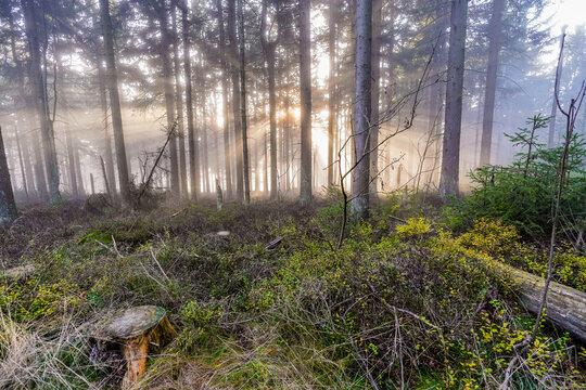 Sonnenstrahlen im Wald im Herbst bei Nebel