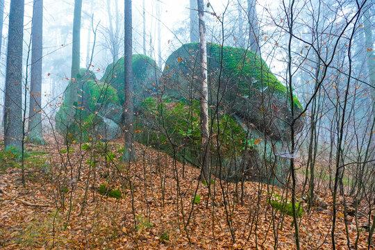 Buchenwald im Herbst im Nebel Berge Nebelwald