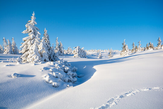 beautiful winter landscape with spruce tree in sunny day