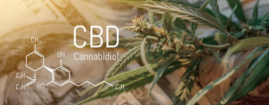 Cannabis Buds Picture of Formula CBD Close-up. Healing marijuana concept. Hemp leaf and dollar bills close-up, marijuana sales.