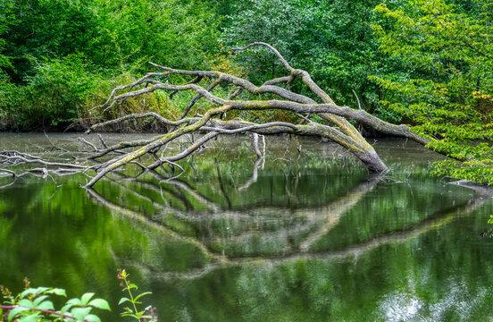 See im Wald in der Wahner Heide