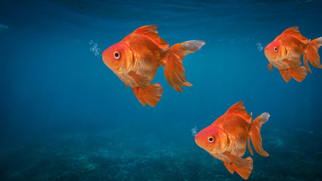 underwater landscape with goldenfish