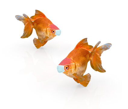 golden fish with surgery mask